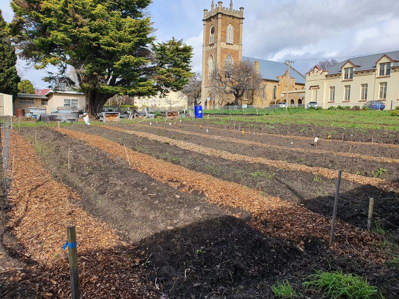 Urban Garden Project – September Update
